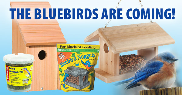 Bluebirds-Supplies-at-Capps