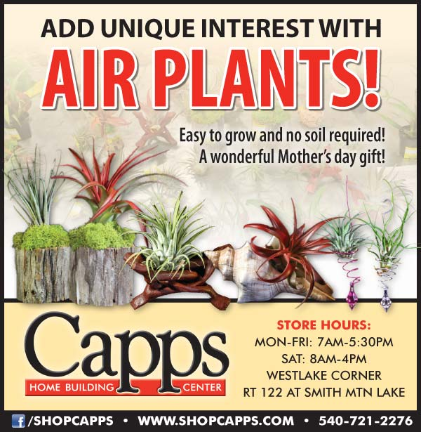 Capps_4.26.17 ad - air plants