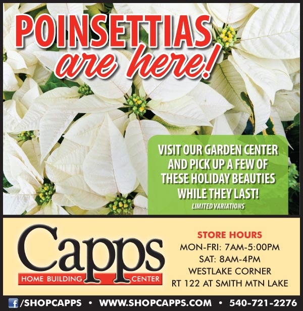 Poinsettias ad